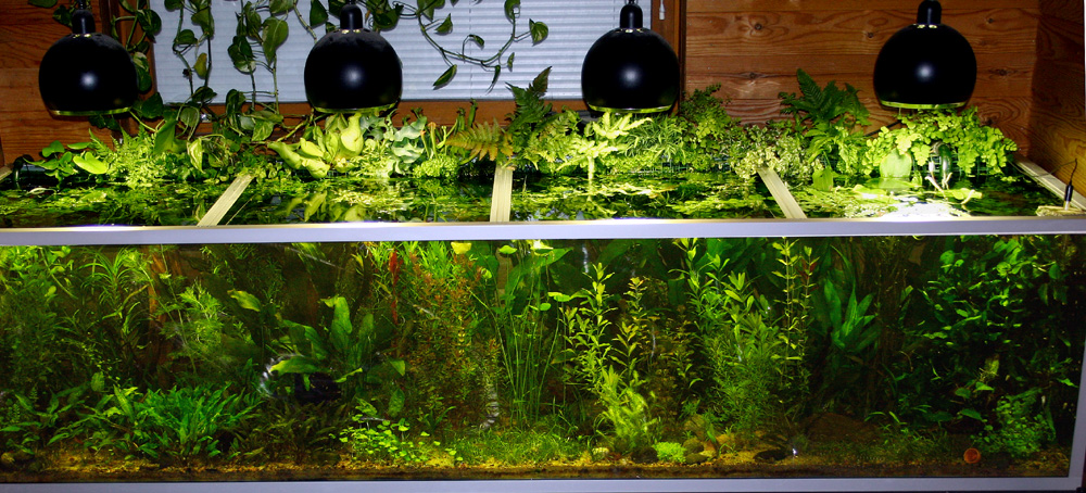 how to have plants grow in a gravel aquarium
